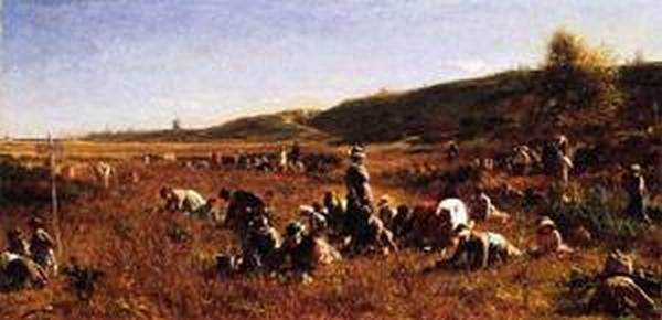 The Cranberry Harvest Island of Nantucket 1880